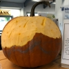 pumpkin-contest-05