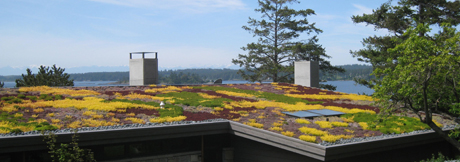 The flowers & plants on the roof....
