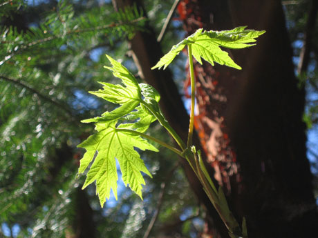 Leaves from Limekiln Preserve, photographed by Tori Benz-Hillstrom