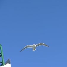 seabird3