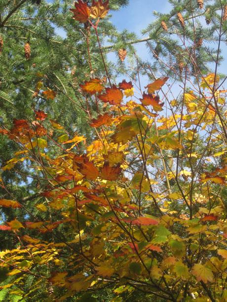 leaves56-1 copy
