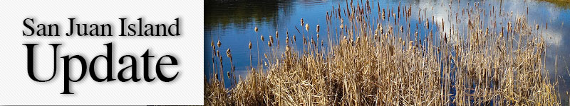 Cattails - Dustrude Photography photo