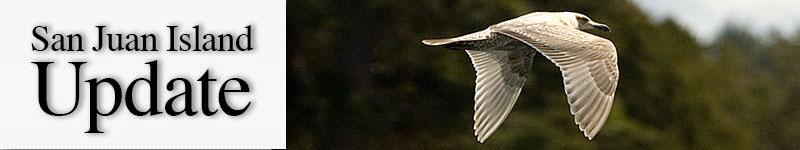 mast-gull-wing