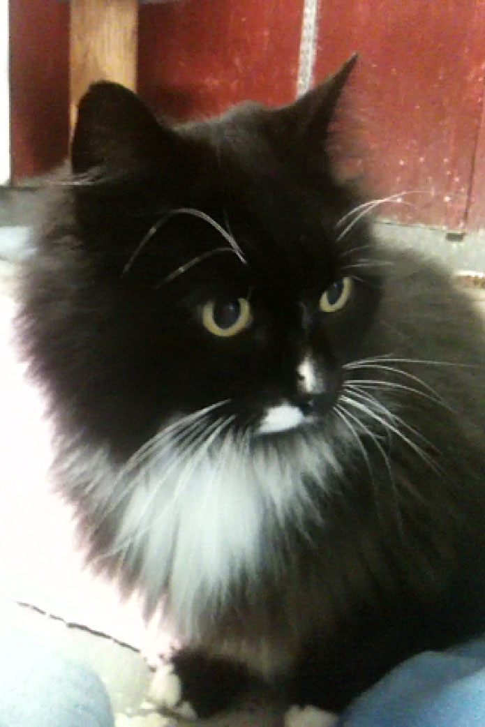 Byron is the Pet of the Week
