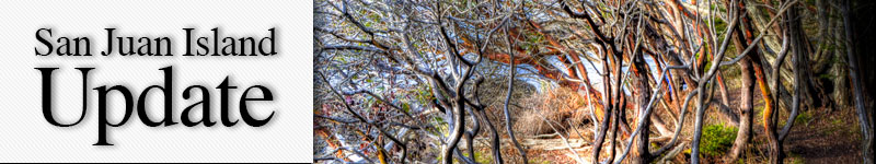 mast-westside-hdr-trees