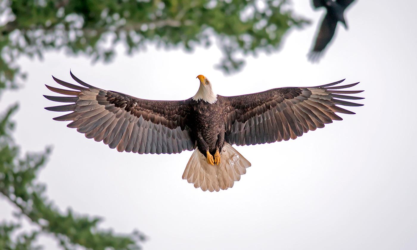 Spread Eagle   San Juan Island Update