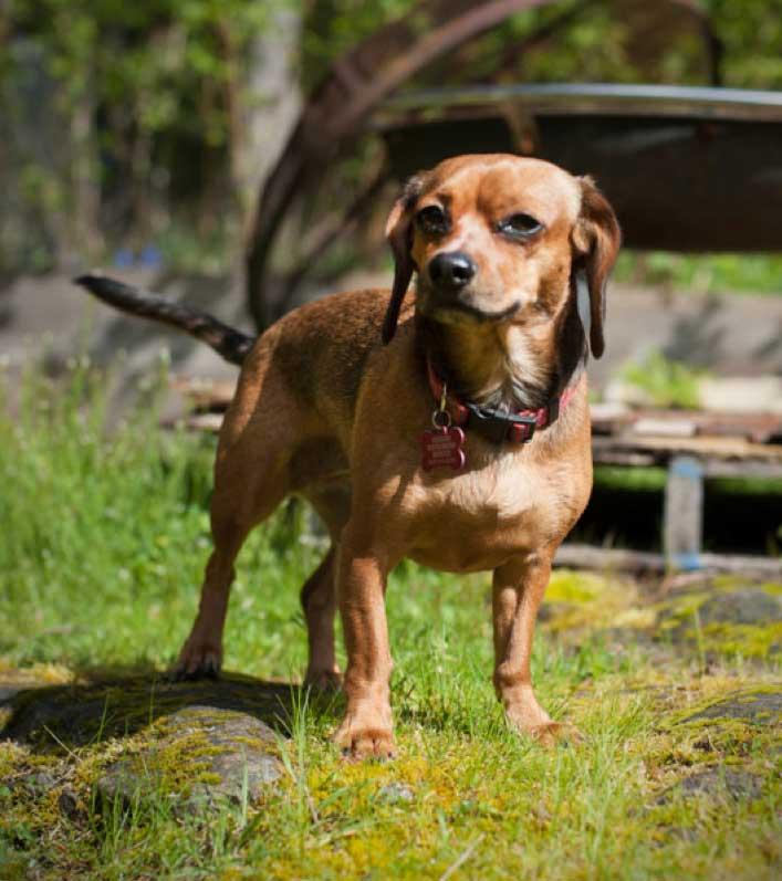 Meet Lucy - this week's Pet of the Week