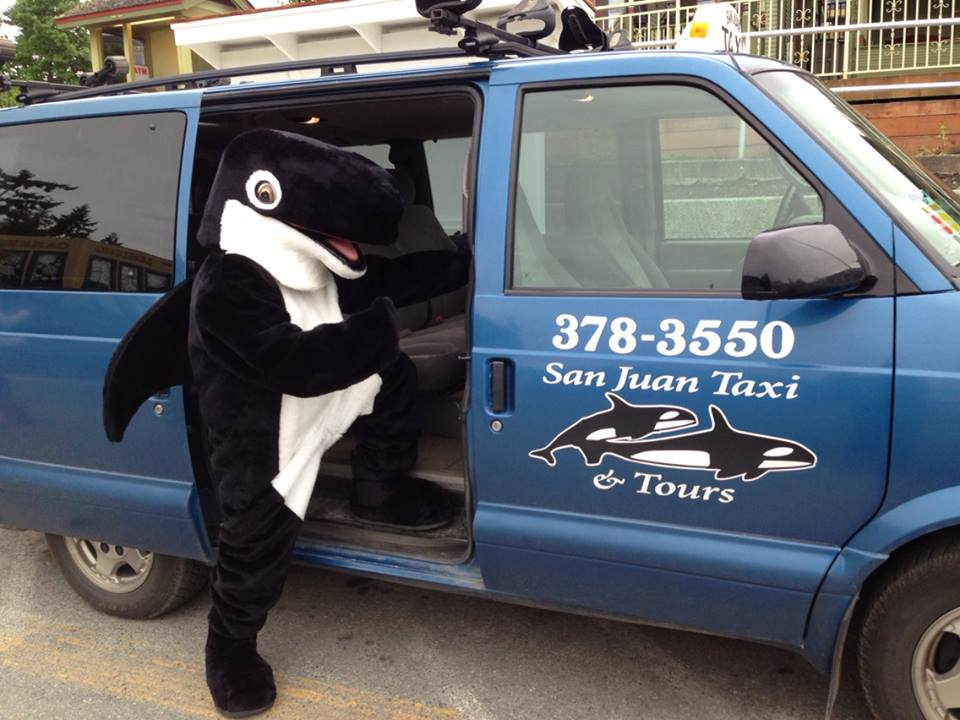 Orca on the Move - Susan Juul photo
