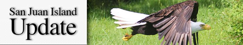 mast-eagle-strafe