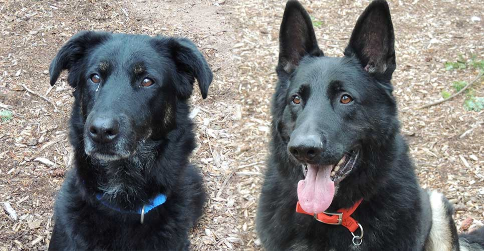 Caesar and Duke