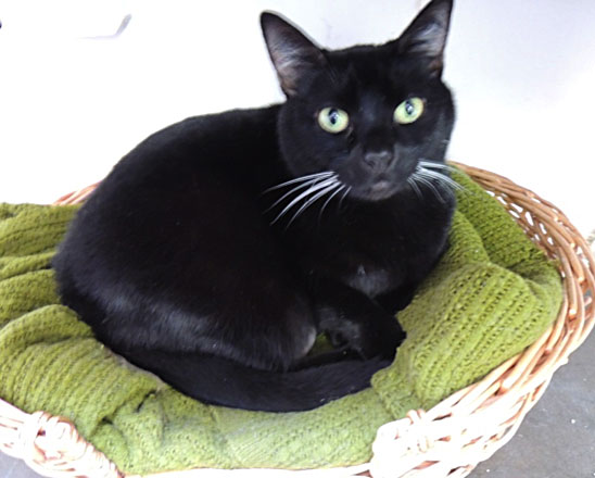 Dizzy is this week's Pet of the Week