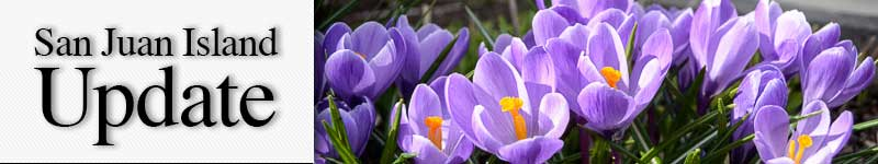 mast-signs-of-spring-crocuses