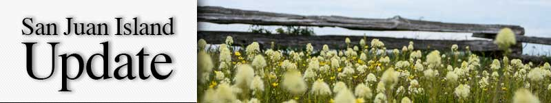 mast-wildflowers-fence