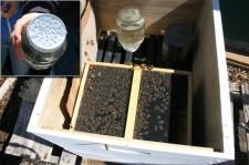 Home made beehive - Cyndi Brast photo