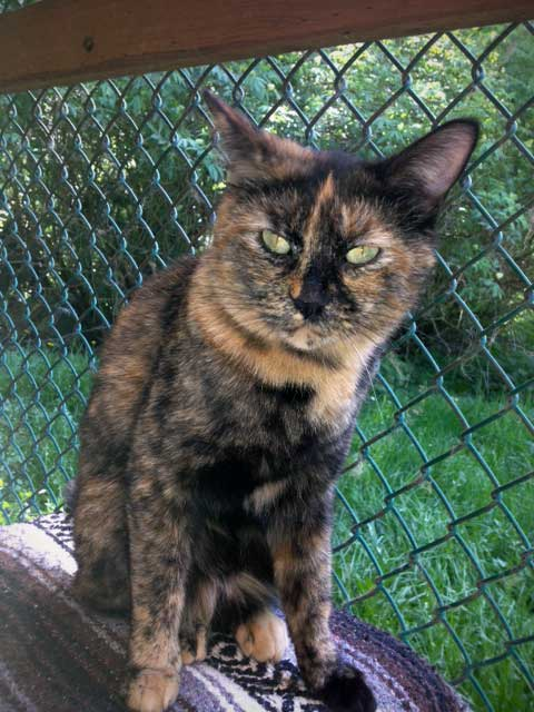 Meet Puma - this week's Pet of the Week - Contributed photo
