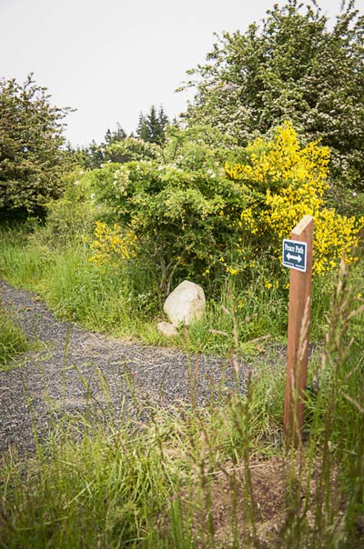 A portion of the new Peace Path walking trail up by the hospital - Tim Dustrude photo