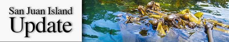 Mast-bull-kelp