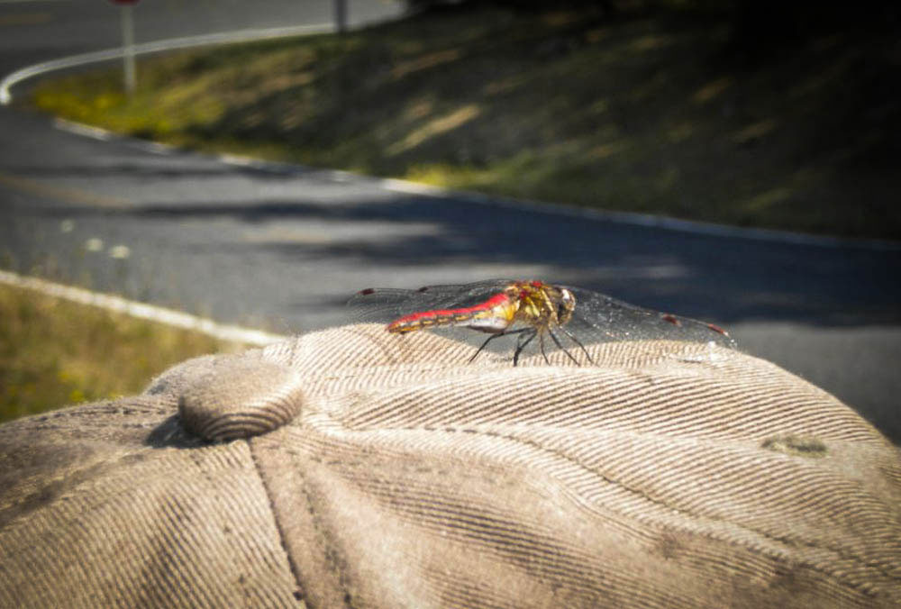 Dragonfly on Louise's Hat - David Bentley photo