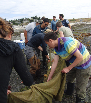 Graduate students from the 2011 fish swimming course at FHL sort through the catch in the seine net at Jackson Beach, San Juan Island - Dominique Roche photo