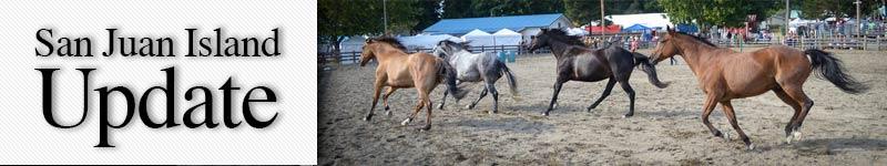 Mast-wild-horses