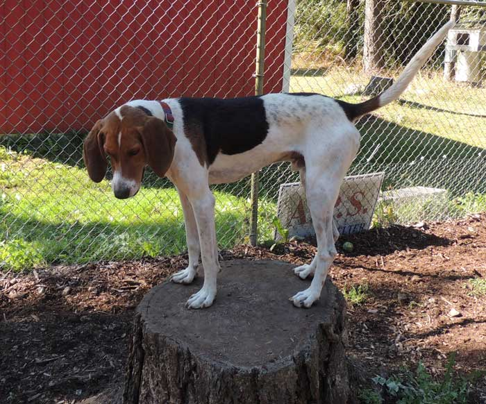 Clyde is this week's Pet of the Week - Contributed photo