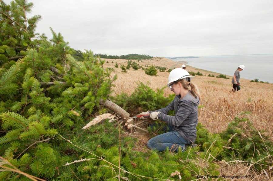 Field work at Mt. Finlayson - Jerald Weaver photo
