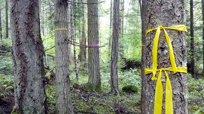 Pre-Commercial Thinning Workshop and Field Tour on Orcas Island, October 19th - Contributed photo
