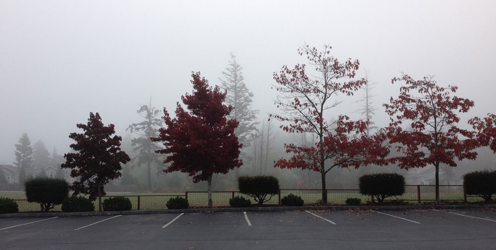 Foggy Parking Lot and Field - Louise Dustrude photo
