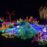 Garden of d'Lights at the Bellevue Botanical Gardens - Contributed Photo