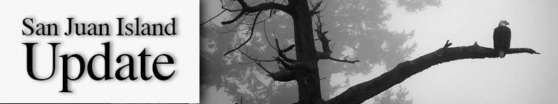 mast-eagle-fog-DannyBurton
