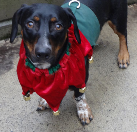 """Radar"" is this week's Pet of the Week - Contributed photo"