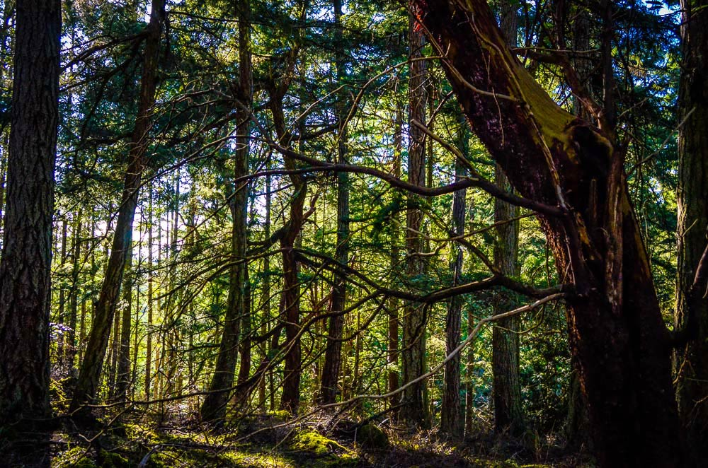 The Enchanted Forest at Mitchell Hill - Tim Dustrude photo