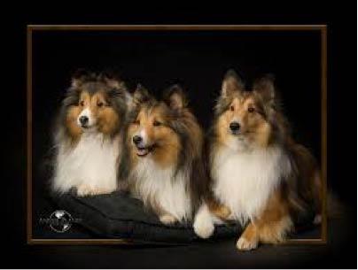 Pet portraits - Alan Niles photo
