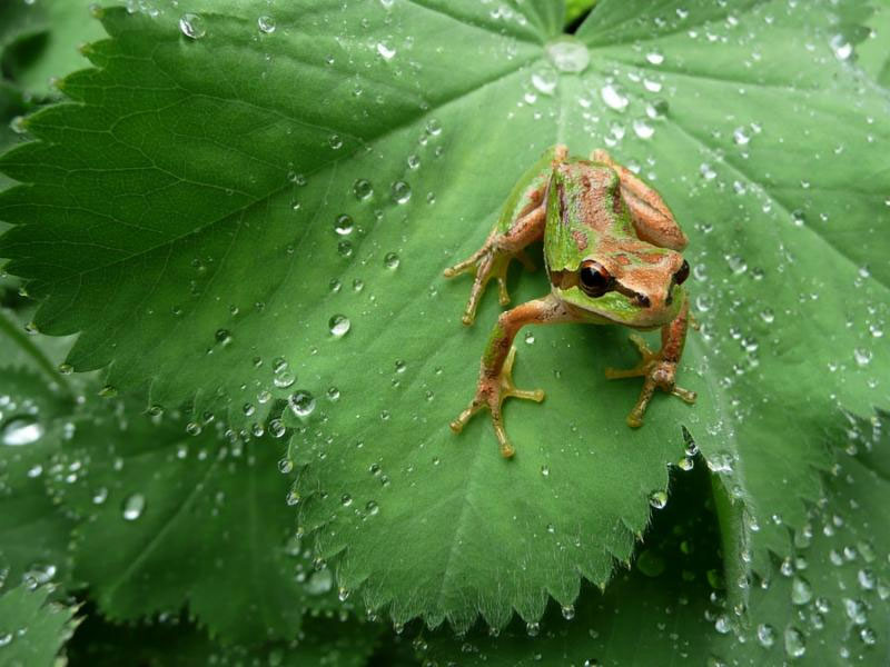 Local Amphibians in the field - Contributed photo