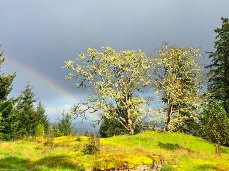 Explore a Backyard Garry Oak Woodland & Learn How to Create Your Own - Shaun Hubbard photo