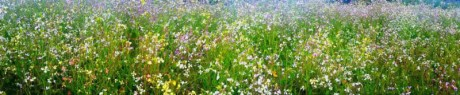 Field of Flowers - Contributed photo