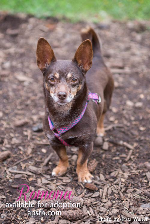 Ramona is this week's Pet of the Week - Traci Walter photo