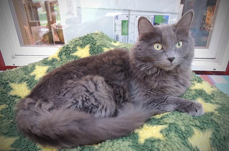 Misty-Mae is this week's Pet of the Week - Contributed photo