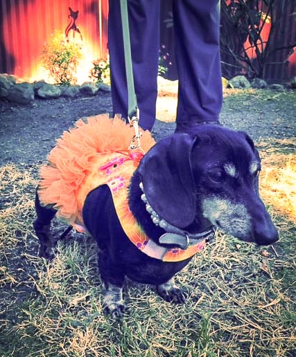 Greta is this week's Pet of the Week - Contributed photo