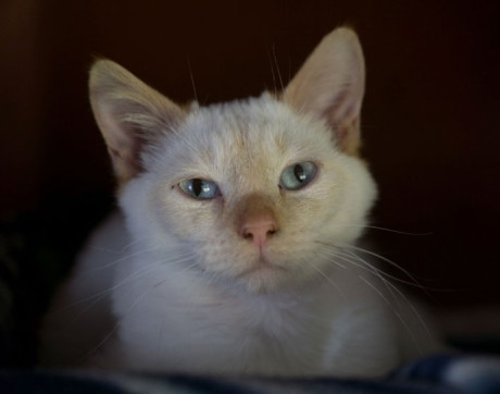 Coulee is this week's Pet of the Week - Contributed photo