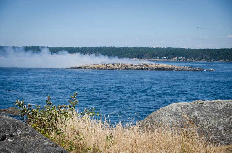 Did you smell smoke in town today? Goose Island in Cattle Pass continues to smolder after the fire last Thursday, and the smoke is blowing across the bay toward town - Tim Dustrude photo