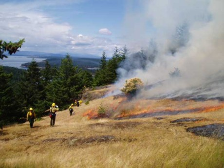 Grassfire - Contributed image