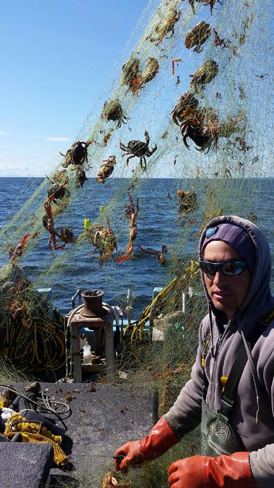 Diver Ken Woodside frees live crab from a derelict fishing net removed from Alden Bank in May 2015. This was one of more than 550 nets removed this year, and among more than 5,600 derelict fishing nets removed throughout Puget Sound since 2002. Photo by Northwest Straits Foundation