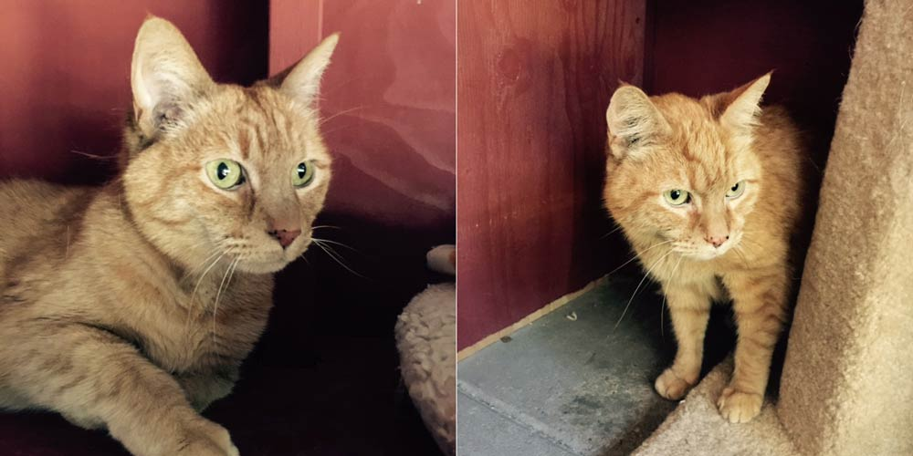 Miss Kitty and Scooter are this week's Pets of the Week - Contributed photos