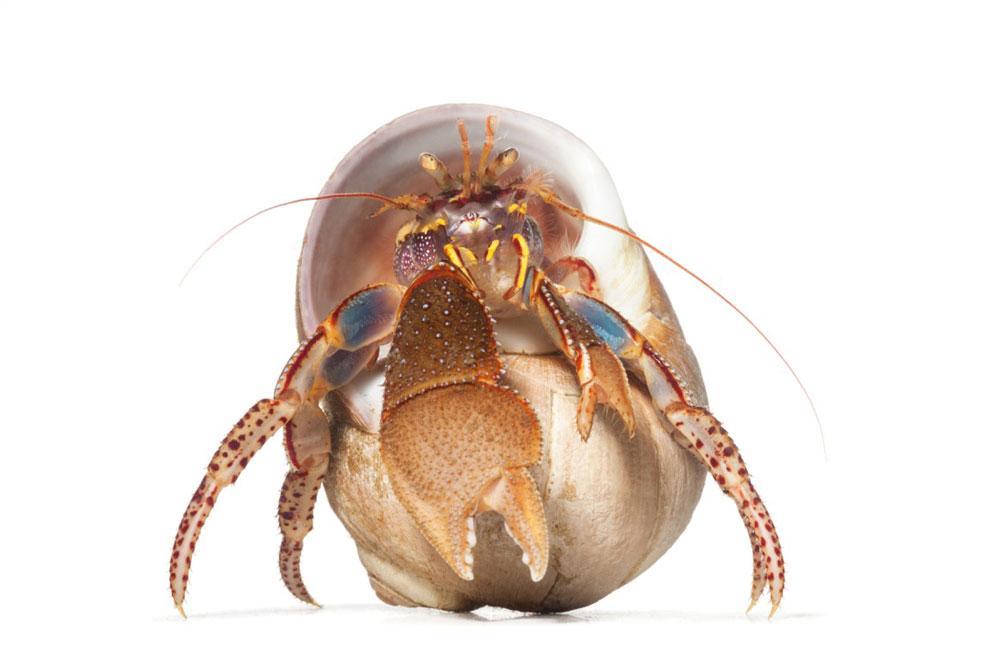 Spineless: Portraits of Marine Invertebrates, the Backbone of Life Author Talk & Book Signing on July 24 - Susan Middleton photo