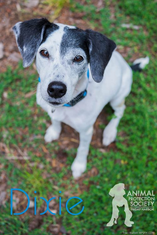 Dixie is this week's Pet of the Week - Traci Walter photo