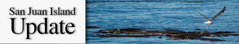 mast-seagull-kelp