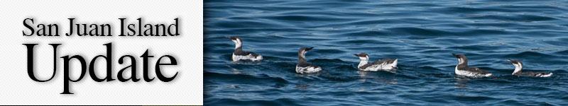 mast-water-birds