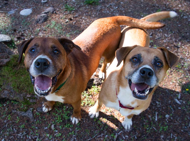Peyton and Eli are this week's Pets of the Week - Contributed photo