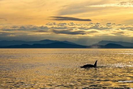 Whales and Clouds - Jim Maya photo